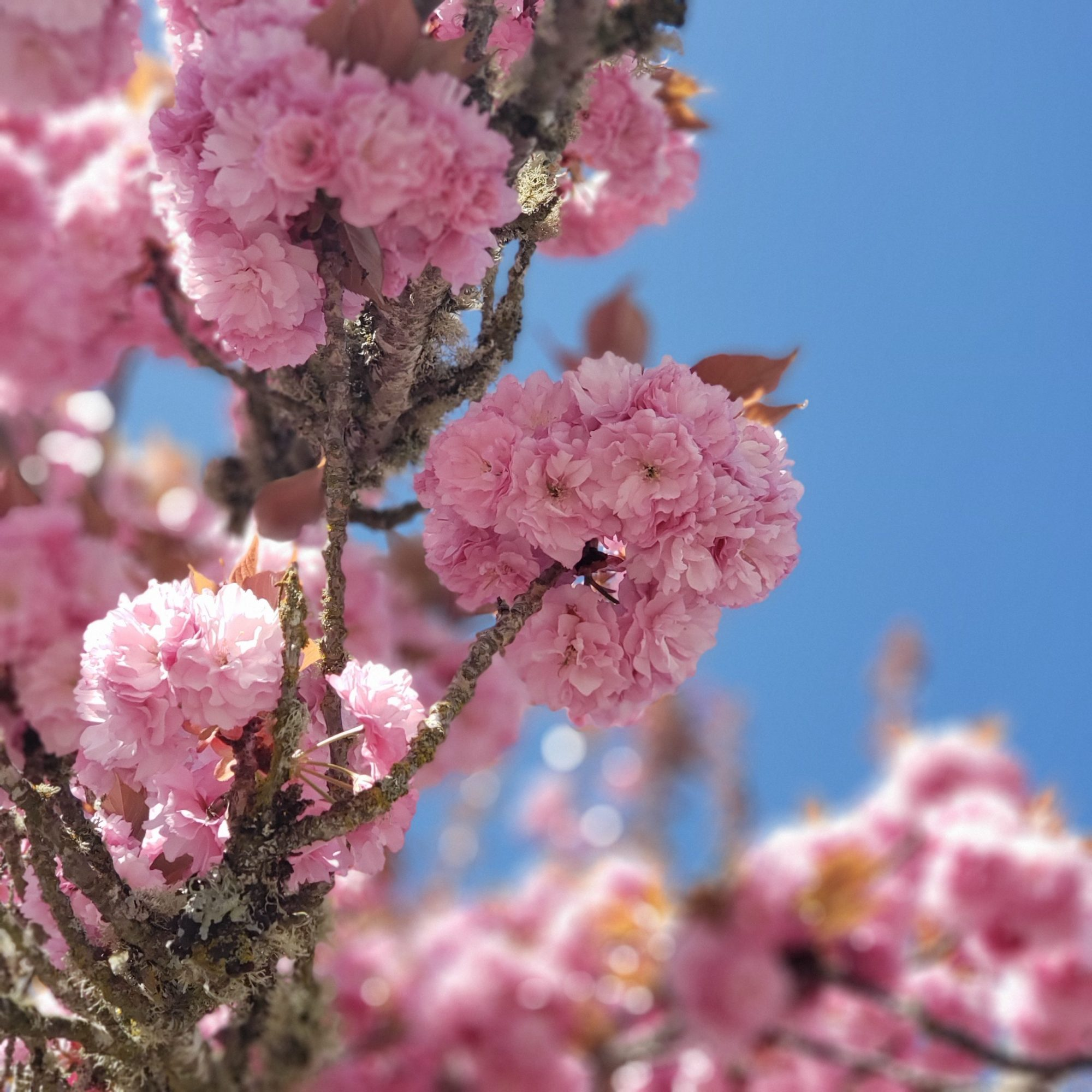 Humble House Journey